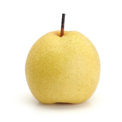 Asian Pear x1pce approx....