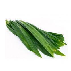 Healthy Thai Foods Pandanus Leaf 100g Fresh Pandan Leaves