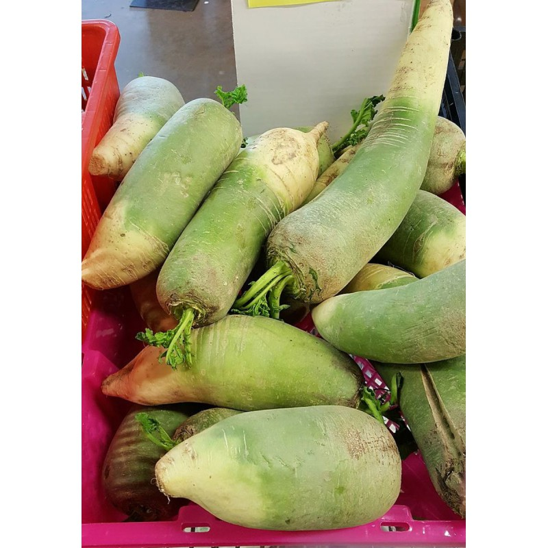 Fresh Whole Green Daikon Mooli 500g-800g Root Vegetable Oriental Winter Radish