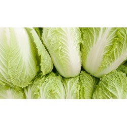 Fresh Chinese Leaf  Approx 1kg Napa Cabbage Chinese Leaves