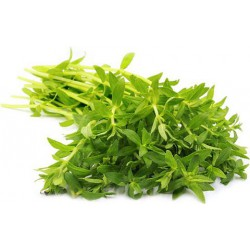 Fresh 100g Kayang Leaf (Ngo Om)