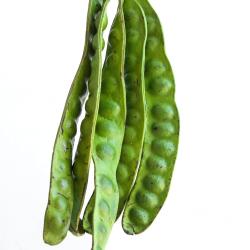 Healthy Thai Foods Sa-Tor Pods (Fak) 400g Petai Tree...